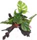 Декорация для террариума Lucky Reptile Forest / FWP-1 -