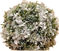 Искусственное растение Green Fly Самшит Невеста / СА-1-22 -