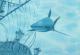 Элемент панно Березакерамика Лазурь корабль 5 бирюзовая (250x350) -