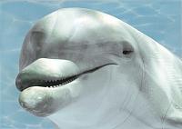 Элемент панно Березакерамика Дельфин 1 бирюзовый (250x350) -