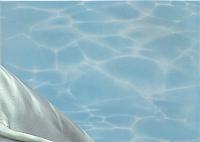 Элемент панно Березакерамика Дельфин 2 бирюзовый (250x350) -