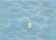 Элемент панно Березакерамика Лазурь Морской мир 1 бирюзовый (250x350) -