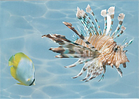 Элемент панно Березакерамика Лазурь Морской мир 2 бирюзовый (250x350) -
