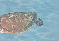 Элемент панно Березакерамика Лазурь Морской мир 4 бирюзовый (250x350) -