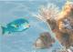 Элемент панно Березакерамика Лазурь Морской мир 5 бирюзовый (250x350) -