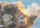 Элемент панно Березакерамика Лазурь Морской мир 6 бирюзовый (250x350) -