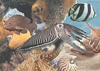Элемент панно Березакерамика Лазурь Морской мир 10 бирюзовый (250x350) -