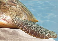 Элемент панно Березакерамика Лазурь Морской мир 12 бирюзовый (250x350) -