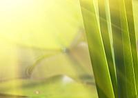 Элемент панно Березакерамика Азалия Лилия 1 фисташковый (250x350) -