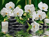 Картина по номерам Picasso Орхидеи у ручья (PC3040035) -