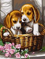 Картина по номерам Picasso Щенки в лукошке (PC3040040) -