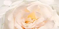 Элемент панно Нефрит-Керамика Амелия / 04-01-1-10-05-06-465-1 (500x250, серый) -
