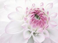 Панно Нефрит-Керамика Фреш Виолетта / 06-01-1-64-04-51-333-0 (750x1000, лиловый) -