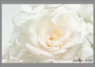 Обеденный стол Васанти Плюс ПРФ 90x70/140 РШ/ОБ (белый/120)
