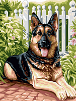 Картина по номерам Picasso Немецкая овчарка (PC3040037) -