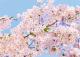 Фотообои Твоя планета Люкс Весна (272x194) -