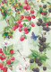 Фотообои Твоя планета Люкс Вкус лета (194x272) -