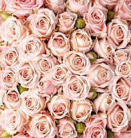 Фотообои Твоя планета Розы (194x204) -