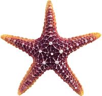 Декорация для аквариума Laguna Морская звезда / 74004166 -