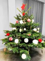 Ель живая HD Nordic Trees Nordmann Датская Премиум (1.5-1.7м, срезанная) -