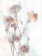 Картина Orlix Гвоздика / CA-12522 -