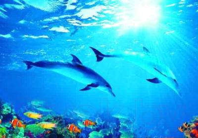 Фотообои листовые Твоя планета Люкс Дельфины
