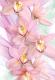 Фотообои Твоя планета Люкс Орхидеи (194x136) -
