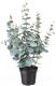 Искусственное растение Ikea Фейка 004.523.70 -