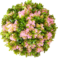 Искусственное растение Green Fly Самшит Магнолия / С-18-22 -