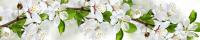 Скиналь Оптион Цветы. Ветка Яблони 38 (стекло, 2800x600x3) -