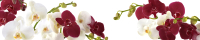 Скиналь Оптион Цветы. Орхидеи на Белом 49 (стекло, 2800x600x3) -