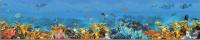 Скиналь Оптион Морская. Морское дно 3 (стекло, 1400x600x3) -