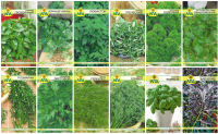 Набор семян АПД Ароматный шашлычок / A105051 -