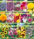 Набор семян цветов АПД Неприхотливые однолетники / A203641 -
