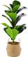 Искусственное растение Home and You 56974-ZIE-STRO-H0060 -