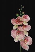 Искусственный цветок Orlix Орхидея / 06-149-O -