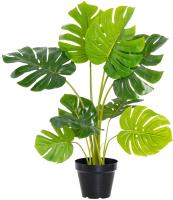 Искусственное растение Home and You 56744-ZIE-STRO-H0050 -