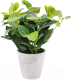 Искусственное растение Home and You 57042-ZIE-STRO-H0030 -