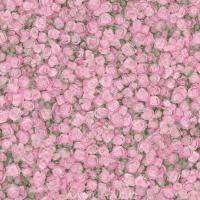 Линолеум Tarkett Fleur Rose 2 (3x2.5м) -
