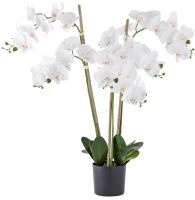 Искусственный цветок Home and You 57669-BIA-STRO-H0075 -