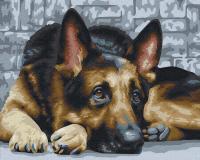 Картина по номерам Picasso Верный взгляд (PC4050366) -