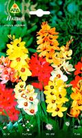 Семена цветов АПД Иксия / A30242 (10шт) -