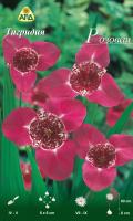 Семена цветов АПД Тигридия Розовая / A30681 (10шт) -