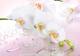 Фотообои Твоя планета Люкс Розовый мираж (194x272) -