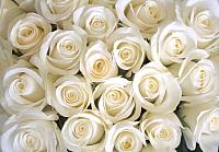Фотообои Citydecor Бутоны роз (200x140) -