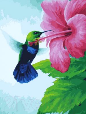 Картина по номерам PaintBoy Колибри и цветок гибискуса / GX29828