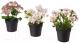 Искусственные растения Ikea Фейка 603.953.34 (3шт) -