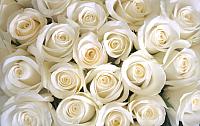 Фотообои Citydecor Бутоны роз (400x254) -