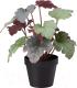 Искусственное растение Ikea Фейка 303.953.02 -