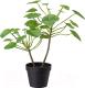 Искусственное растение Ikea Фейка 503.953.01 -